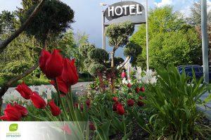 dieses Foto zeigt Blumen vor dem Aparthotel Kottenforst